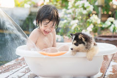 Cute asian  child bathing with siberian husky puppy Stock Images