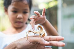Cute asian child girl looking and touching leaf grasshopper that stick on parent hand with curious and fun royalty free stock images