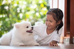 Cute asian child girl playing with her Spitz dog royalty free stock photos