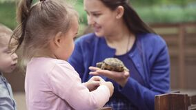 Cute asian child holding and playing with turtle. She is not scared to hold it on hand. Concept of self learning and stock video