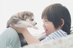 Cute asian child playing with siberian husky puppy Royalty Free Stock Photography