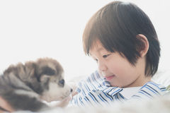 Cute asian child playing with siberian husky puppy Stock Photos