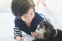 Cute asian child playing with siberian husky puppy Stock Images