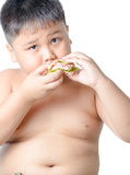 Cute asian fat boy eating sandwich isolated. On white Stock Photos