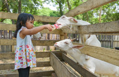 Cute Asian girl bottle-feed goat. At zoo Royalty Free Stock Images