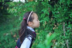 Cute Asian little beautiful girl smell flower Royalty Free Stock Photos