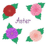 Cute aster set, colorful flowers collection of Stock Image