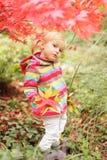 Cute autumn Royalty Free Stock Photos