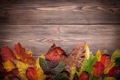 Cute Autumn background Stock Photo
