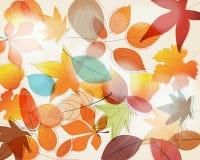 Cute autumn illustration Stock Photos