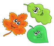 Cute autumn leaves Stock Image