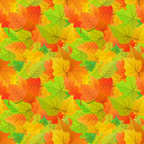 Cute autumn leaves from different kind of trees, seamless pattern Royalty Free Stock Image