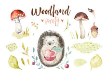 Cute baby animal nursery isolated illustration for children. Watercolor boho forest drawing, watercolour, hedgehog image Stock Image