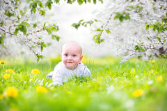 Cute baby in a blooming spring apple garden Stock Image