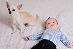 Cute baby boy and chihuahua dog on bed. Growing up with a pet at home concept. Royalty Free Stock Photography