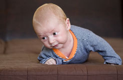 Cute baby boy crawling royalty free stock images