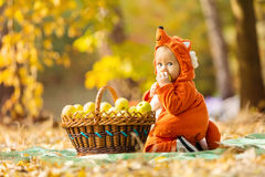 Cute baby boy dressed in fox costume sitting by basket with apples. In autumn park royalty free stock photography