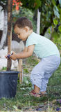 Cute baby boy gather plums. In an orchard stock photography