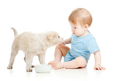 Cute baby boy looking at puppy. Isolated royalty free stock photo