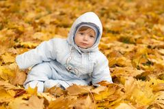 Cute baby boy playing in autumn park. Funny kid sitting among yellow leaves. Adorable toddler with oak and maple leaf Stock Image