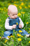 Cute baby boy sitting on a lawn with dandelions Stock Photos