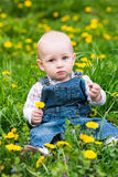 Cute baby boy sitting on a lawn with dandelions Royalty Free Stock Photography