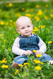 Cute baby boy sitting on a lawn with dandelions Royalty Free Stock Image