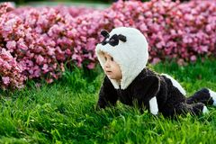 Cute baby boy wearing a Panda bear suit sitting in grass and flowers at park. Cute baby boy wearing a Panda bear suit sitting in grass and flowers at park stock photo