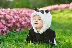 Cute baby boy wearing a Panda bear suit sitting in grass and flowers at park. Cute baby boy wearing a Panda bear suit sitting in grass and flowers at park stock image