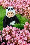Cute baby boy wearing a Panda bear suit sitting in grass and flowers at park. Cute baby boy wearing a Panda bear suit sitting in grass and flowers at park stock images
