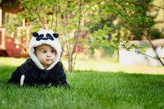 Cute baby boy wearing a Panda bear suit sitting in grass at park. Cute baby boy wearing a Panda bear suit sitting in green grass at park. copy space stock photography