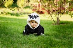 Cute baby boy wearing a Panda bear suit sitting in grass at park. Cute baby boy wearing a Panda bear suit sitting in green grass at park. copy space royalty free stock image