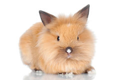 Cute baby bunny Stock Photos