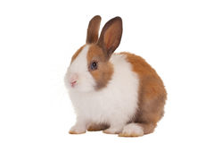 Cute baby bunny Stock Photo