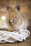 Cute baby bunny. Curious Bunny, springtime colorful bright theme Stock Photo