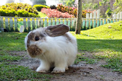 Cute baby bunny in the field. Cute baby bunny in the garden looking at to camera Royalty Free Stock Photo