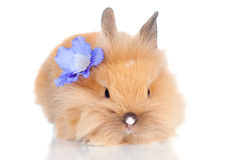 Cute baby bunny with a flower stock image