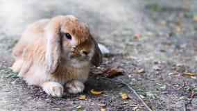 Cute Baby Bunny rabbit Royalty Free Stock Photos