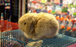 Cute Baby Bunny. Baby rabbit sitting on top of a cage in a pet shop Stock Photos