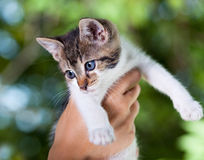 Cute baby cat Royalty Free Stock Images
