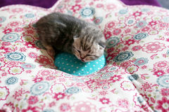 Cute baby cat Stock Photos