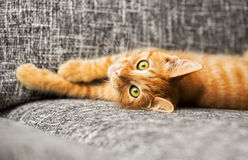 Cute baby cat Royalty Free Stock Photos