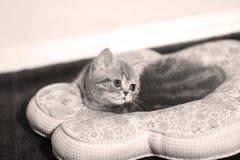 Cute baby cat, newly born Stock Image