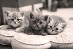 Cute baby cat, newly born Stock Photos