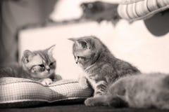 Cute baby cat, newly born Royalty Free Stock Image