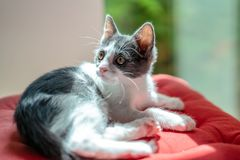 Cute Baby Cat Portrait At Home stock images