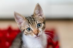 Cute Baby Cat Portrait At Home stock image