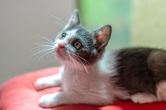 Cute Baby Cat Portrait At Home stock photos