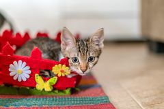 Cute Baby Cat Portrait At Home stock photo