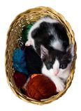 Cute Baby Cat In Wicker Basket White Background. Black & white cute kitten in wicker basket isolated on white background Royalty Free Stock Photography